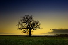 Tree at Sunset (Mute*) Tags: sunset tree landscape canonef1740mmf4lusm buckden picturethecure2006 ptcpromo06