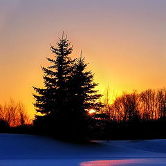 Peace* (Imapix) Tags: voyage travel winter sunset red sun snow canada tree nature yellow soleil photo peace photographie quebec peaceful tranquility qubec fir coucherdesoleil paix imapix topfavpix gatangbourque gatanbourque copyright2006gatanbourqueallrightsreserved  copyright2006gatanbourqueallrightsreserved pix50 imapixphotography gatanbourquephotography