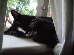 2005.12.27 (natmeister) Tags: cat kitten phil philthecat