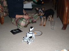 12/25/05 - My Parents' House: Megan and Lottie (mavra_chang) Tags: christmas family dogs animals robots chihuahuas christmas2005 maltese yorkshireterriers lottie christmasday christmasday2005 robotdogs robodogs morkies