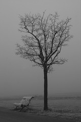 Winter outside the cementery (MariaJC) Tags: winter cold tree ice cemetery fog 1025fav bench lafotodelasemana landscapes quiet sad topv222 lonely desolate interestingness56 emptybench lfsmejor 1in10f300v i500 exc3 exc4 exc5 exc2 buena1 exc1 analiza4549 analiza9 lfsarboles abigfave aplusphoto
