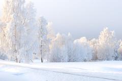 sunshine (tienna) Tags: snow topv111 topv2222 wow interestingness topv555 topv333 bravo frost sweden topv1111 topv999 topf300 explore topv5555 topv777 topf150 topv3333 topv4444 topf100 topf200 topv6666 frostbites topphoto abigfave holidaysvacanzeurlaub bestofwinter world100f