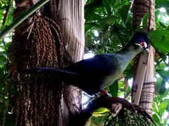 ??? (LuPan59) Tags: kodak dx7590 lupan oceanario fauna