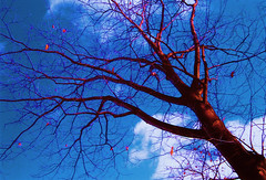 Yggdrasil - The World Tree (Yawp Barbarian) Tags: winter canada nature tag3 taggedout outdoors tag2 colours tag1 lookatme yggdrasil