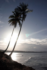 Twin palms (.brian) Tags: palmtrees ocean water costarica manzanillo limon