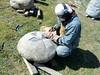 fil day 9 03_resize (te_kupenga) Tags: clip day10 kupenga filipetohi gen06