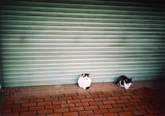 sheltering from the rain -amayadori- (rahen z) Tags: 15fav cats film rain 510fav iso100 tokyo rainyday olympus neko xa  zuiko olympusxa streetcat nyanko japanesecat  fujisuperia100 amayaadori  shelteringfromtherain