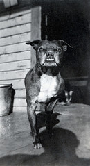 Nice Doggie (elston) Tags: shadow bw dog found fierce muscular vernacular photographersshadow vps