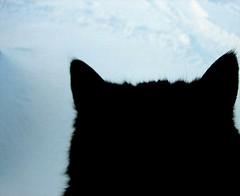 tinna on white snow... (arny johanns) Tags: pet cats pets white snow black cold animal animals cat iceland kitten kitty kisa kttur tinna lifeisart catsandwindows