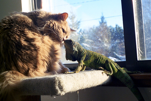 A cat & reptile moment.