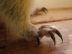 Claws of Doom (cdw9) Tags: macro foot paw squirrel claw paws knoxvillehouse claws nibbler richardsonsgroundsquirrel cdw9