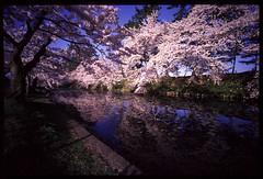 050503A-G2D-Hologon16-11 (wing of kaz) Tags: castle japan cherry blossoms contax aomori g2d hologon16mm