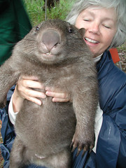 Rodent of Unusual Size (The Fuzzy Squid) Tags: cute found rodent fuzzy wtf wombat awesomeness