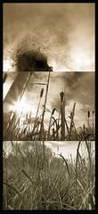 Endangered Wetlands (MaureenShaughnessy) Tags: sky music cold sepia montana almostbw conservation seeds textures cattails utata wetlands blogged marsh idyll listen threatened coldseason pictureswstories newwestnet seasonalrhythmswinter