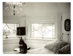 Peggy in the bedroom! (brettbigb) Tags: house love home cat polaroid him happy town washington bed bedroom iron honeymoon unitedstates folk hometown cottage victorian dream gingerbread 2006 pillows brett chandelier stray skagit polaroids he peggy 667 stainedglasswindow smalltown goodtimes eastlake wrought landcamera 1892 stainedglasswindows skagitcounty queenann maxfieldparrish polaroidlandcamera ilivehere woolley sedrowoolley sedro threeleggedcat polaroid667 thehoneymooncottage wroughtironbed threelegget eastlakestyle automatic230 itmustbelove handicat welivehere gatewaytothenorthcascades loggingtown thisiswherewelive thiswasaloggingtown thetownthatloggingbuilt savepolaroid savepolaroids thecatwhoturnedonandoff sedrowoolleyisatimemachine