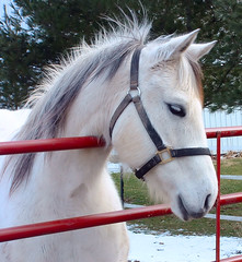 Looking at a Cat (cindy47452) Tags: horse white 510fav cheval star orleans bravo inho gutentag indiana 100views 400views 300views 200views 500views orangecounty 800views 600views 700views 1000views mpf 3mp 900views 1100views 1200views 1300views 1500views mireasrealm i500 1400views wyf specanimal anawesomeshot impressedbeauty flickraward bachspicsgallery horsesrule anawesomephotographer avision inhorse