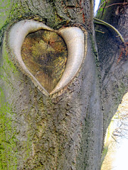 ces petits mots d'amour... (Biscarotte) Tags: tree love nature wow wonder 100v remember heart coeur rouen amour bark 600v 200v arbre valentinesday 500v corce saintvalentin 700v 300v 15f 1000v 400v 30f 20f 25f 2000v 900v 800v 1800v february14th 1600v 1700v 14fvrier 1200v 1100v 1900v 2100v 1300v 1400v 2200v 2300v 2400v