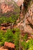 20150523 Emerald Pools (Zion)-3 (Tony Castle) Tags: park nature forest utah us waterfall unitedstates hurricane national pools zion znp emeral