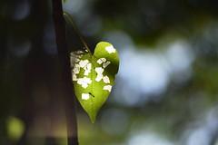 Pintadinha linda (Olga Terumi) Tags: folha decorao pintadinha