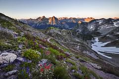Wildflowers at Maple Pass (i8seattle) Tags: explore wildflowers northcascades lakeann cascadeloop maplepass maplepassloop