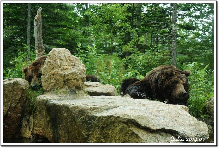 熊牧場 (31)