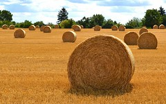 like rolling stones (mujepa) Tags: summer france harvest bales lorraine rollingstones strawbales bundles paille moisson meules