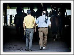 Clement Team to the Track (EASY GOER) Tags: park horses horse ny newyork sports race canon track belmont mark iii running racing 5d athletes races 56 thoroughbred equine thoroughbreds 400mm markiii