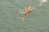 Triathlon de Bergerac (TATIUMZI) Tags: france sport sony sigma dordogne triathlon nage bergerac sudouest aquitaine sigma7020028 sonyalpha sonyalpha700