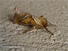 Orange Swift Moth (Huddsbirder) Tags: orange work moth olympus swift huddersfield huddsbirder sz31mr