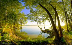When mood matters.. (SuvadipGuhaD5200) Tags: landscape professionallandscape professional exposure lensglare lake glare sky woods trees tripod forest cpl circularpolarizer