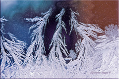 Frozen Forrest (Aquamarine Images) Tags: artisticphotos frozenwindows winterart aquamarineimages ruby5 ruby10
