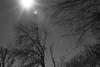 Sun & Ice (TablinumCarlson) Tags: neuss novesia grimlinghausen winter eis ice sonne sun leica m8 leicam 90mm summicron backlight gegenlicht silhouette baum tree ast zweig sw bw erft rhein nrw rheinland north rhinewestphalia nordrheinwestfalen lowkey