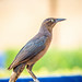Birds of Punta Mita