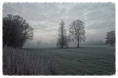 A field in January (3pebbles) Tags: winter january frost mist cold morning field rural countryside trees crops hedge clouds