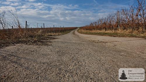 Wirtschaftsweg in den Weinbergen bei Mommenheim