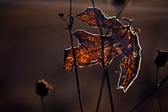 Ich friere mit den dreckigen Knien in der Wiese fest und beglückwünsche das Blatt, dass es dabei schöner verziert ist. (Manuela Salzinger) Tags: winter schwarzwald blackforest morgen morning wiese meadow frost sonnenaufgang sunrise