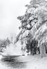 20161231_WES_0053 (Veselin Bonev) Tags: shipka staraplanina winter monument