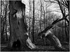 An dead old Oak that looks like an Alien (Thunderbird61) Tags: oak old alien sabawald jungle hessen hofgeismar sw zw nb zwartwit schwarzweis blackwhite monochrome pentax pentax645z pentaxart landscape bw mediumformat
