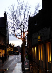 Looking Up Kirkwall's Albert Street (orquil) Tags: lookingup albert paved street streetscene kirkwall town centre royalburgh buildings shops dusk afternoon january winter illuminated windows solitary leafless tree thebigtree silhouette minilights narrow oneway background twoway broadstreet more trees festivelights sky clouds orkney islands scotland uk unitedkingdom greatbritain orcades atmospheric attractive interesting urban colourful memorable