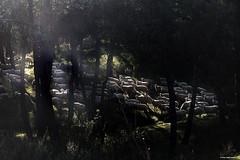 Sombras y luces (Francisco José López) Tags: franciscojoselopezmorante canon g7x rebaño paisaje naturaleza