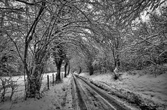 La neige en noir et blanc ... (Prx.01) Tags: neige ain france landscape paysage chemin
