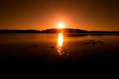 Stocksund (Larson.patrik) Tags: golden sun forest sea water duck orange sweden stocksund contrast light horizon canon canon6d wide