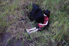 IMGP4240 (HyperLaceAlchemists) Tags: roses cat doll bjd sona dollmore