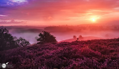 Sunrise dream (Robert Stienstra Photography) Tags: morning sky sun mist nature colors beautiful beauty fog sunrise skyscape landscape landscapes hei skyscapes posbank daybreak dreamscape heide morningsky beautifulnature rheden heither allnaturesparadise
