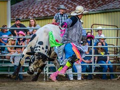DSC_1879 t vts (Photos by Kathy) Tags: bulls rodeo bullriding bullfighters foxhollowrodeo