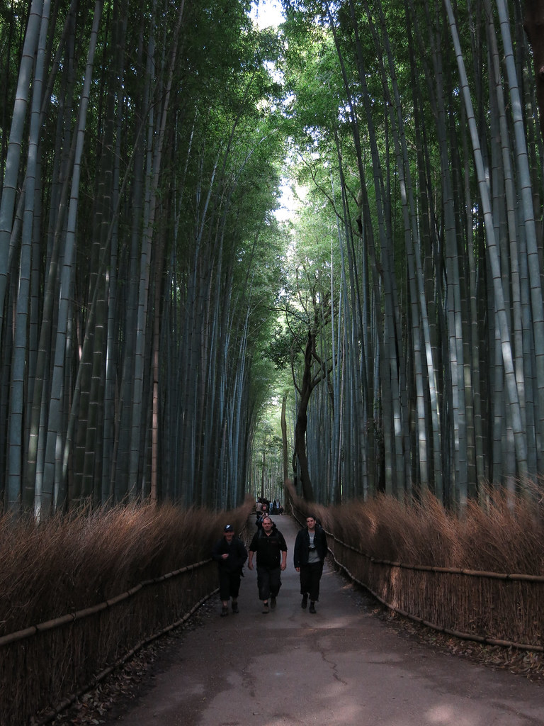 The World S Best Photos Of Arashiyama And Bambuswald Flickr Hive Mind