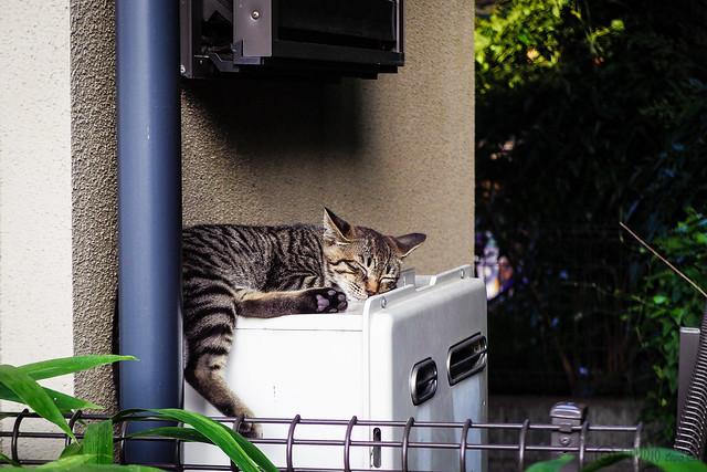 Today's Cat@2015-08-07