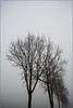_alley (fot_oKraM) Tags: alley allee bäume trees winter dezember sky himmel vreden december 2016