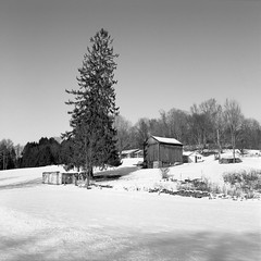 Winter (Rafakoy) Tags: minoltaautocord rokkor75mmf35 75mm ilfordhp5plus ilford hp5 plus 400 kodakhc110 epsonperfectionv600 scan film pa honesdale country snow winter 2017 cold season white 120 autocord pennsylvania 6x6 square negative expired selfdeveloped hc110 dyberry tannersfalls barn farm landscape epson v600