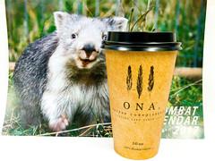 Payday coffee with wombat calendar (garydlum) Tags: woden coffee canberra wombat urbanbean phillip australiancapitalterritory australia au